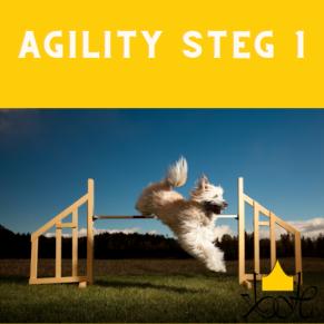Agility steg 1 - Agility steg 1 21/6 Ella Johansson