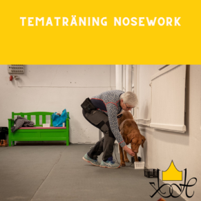 Tematräning Nosework - Nose Work tematräning -höga och oåtkomliga gömmor 7/10