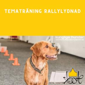 Tematräning Rallylydnad - Tema Rallylydnad Uthållighet/Följsamhet