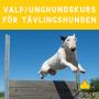 Valpkurs/unghundskurs för tävlingshunden