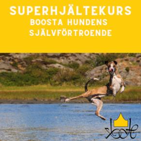 Boosta självförtroendet - superhjältekurs som passar de flesta hundar - Boosta självförtroendet 18/8