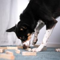 Coachgrupp för lydnadsekipage & friskvård för tävlingshunden