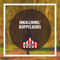 Inkallning/koppelkurs på Alingsås Hundarena