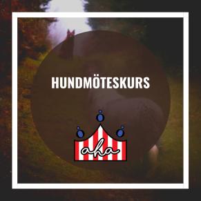 Hundmöteskurs på Alingsås Hundarena - Hundmöteskurs på Alingsås Hundarena 1/11