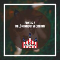 Fokus & belöningsutveckling på Alingsås Hundarena