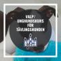 Valpkurs/unghundskurs för tävlingshunden - Valpkurs/unghundskurs för tävlingshunden10/11