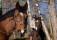 hästar 018