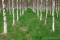 Skotteskogen