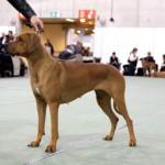 Dogs4All-Norsk Vinner 25.11.12 178_Kita