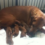 Filicia with her new born litter