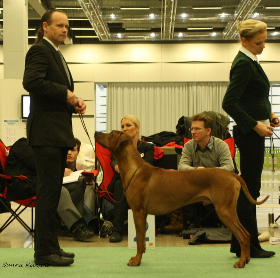 Ch Kangelani's Impressive Ino 2nd best dog