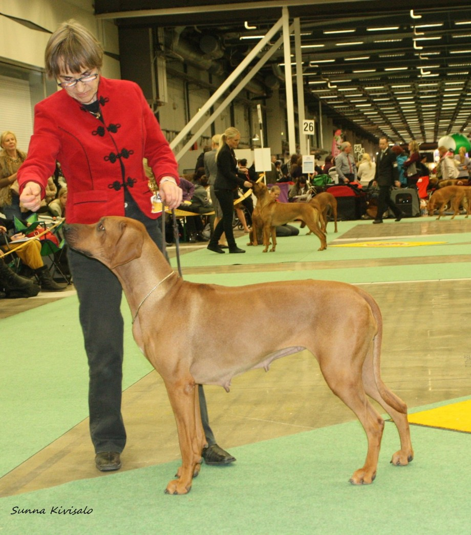 Ch Kangelani's Impressive Inka 4th best champion bitch