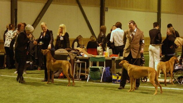 Best of breed competition.