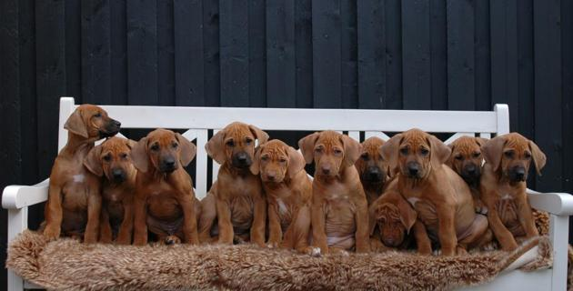 The Boys: Icon, Izaan, Inuru & Insuli The Girls: Ivanna, Indiana, Inubia, Indiya, Iluna, Ibbie & Idella