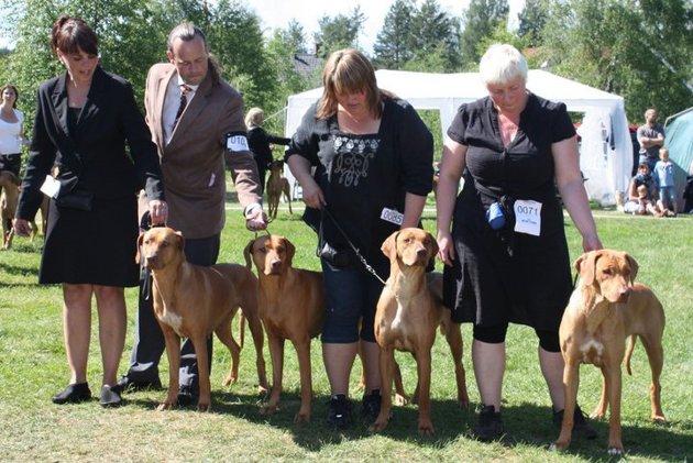Kangelanis breeder group: Ch Kangelani's Gentle Gaby by Clay, Ch Kangelani's Gentle Malaika by Clay, Kangelani's Kuwa Keepa, Kangelani's Kuwa Nia