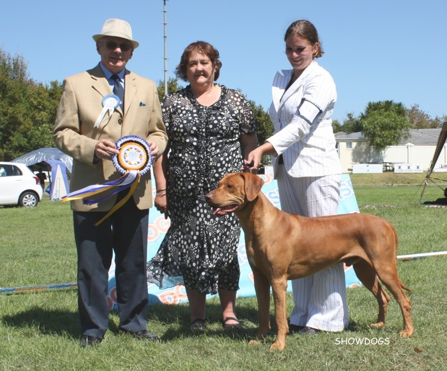Oshy awarded BIS at the all breed show at Liesbeek by Mr Greg Eva