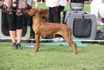 Kangelani's Joyful Juma CAC winne