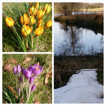 Våren på väg i Gällared