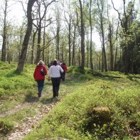 vandring i ekskogen