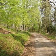 underbara skogsvägar