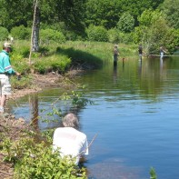 Fritt fiske i ån Ätran