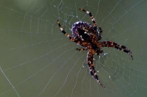 Spindlar-- Skalbaggar & Sniglar