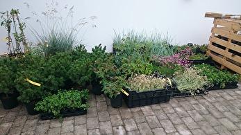 Växterna levereras direkt hem till din trädgård.