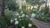 skymning-trädgård
