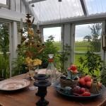 butik-shop-stileben-höstrundan-grönsaker-frukt-fransk-ljusstake-kandelaber-tomater-växthus-drivhus-återbruk-ängelholm-furutorp-trädgård