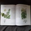 Tidens stora bok om träd & buskar