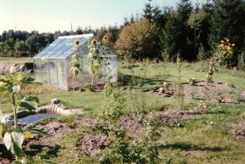 Första sommaren med min första trädgård. Jag byggde och anlade trädgården helt själv.