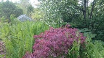 Så här såg min trädgård ut 2004