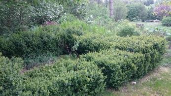 2010 lämnade jag trädgården och idag har naturen fått ta över. Jag kan lova att naturen tar över snabbt. Lite sorg finns givetvis att det blivit så men tiden har inte räckt till skötseln.