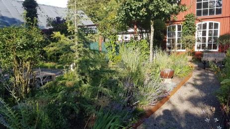 Ny plantering vid köksträdgården.