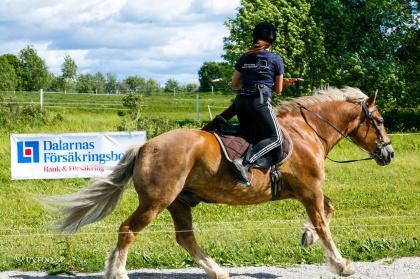 Hästar behöver samma förberedelser som du, även mentalt! Detta synsätt hade deltagarna på tävlingslägret gemensamt förutom att de ville förbättra sina resultat på tävlingsbanan. Foto: cyroo.se