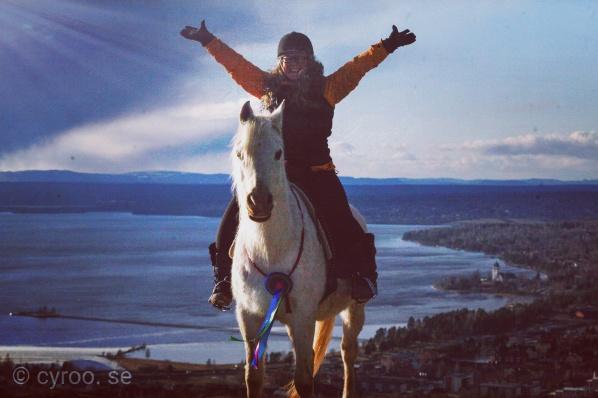 Team Jeenial ox hedrades med en Bettlös Ambassadörsrosett från World Bitless Association i början av 2020. Varmt välkommen till Akademin för Beridet bågskytte! För hästar och människor sedan 2012.
