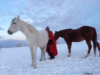 Det finns ett varierat och intressant språkuttryck bland hästar, och det språket kommer de att använda även gentemot oss.