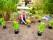 Trädgårdsarbete, plantering