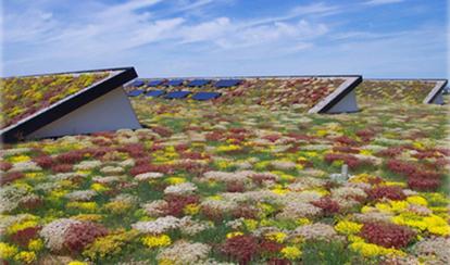 Vackert & miljövänligt sedumtak - takläggare Falkenberg, Halland