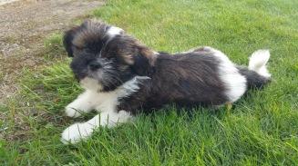 Vår nye familjemedlem Gizmo