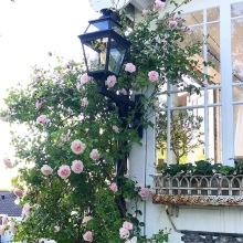 Utebelysning i trädgård - av Alegni.com