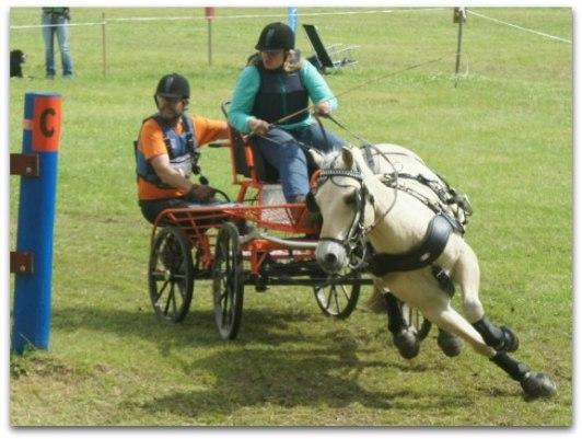 HorseWorkz.se
