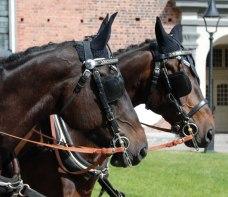 Hästarna står utanför kyrkan och inväntar brudparets ankomst
