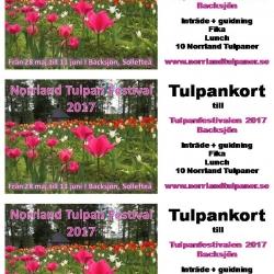 Presentkort Norrland Tulpan Festival 2018