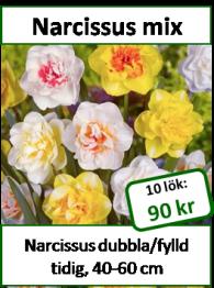 Narcissus mix, 10 lökar