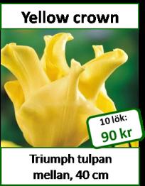 Yellow crown, 10 lökar