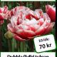 Cabella, 10 tulpanlökar