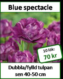 Blue spectacle, 10 tulpanlökar -