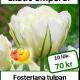 Exotic emperor, 10 tulpanlökar