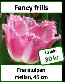 Fancy frills, 10 tulpanlökar -
